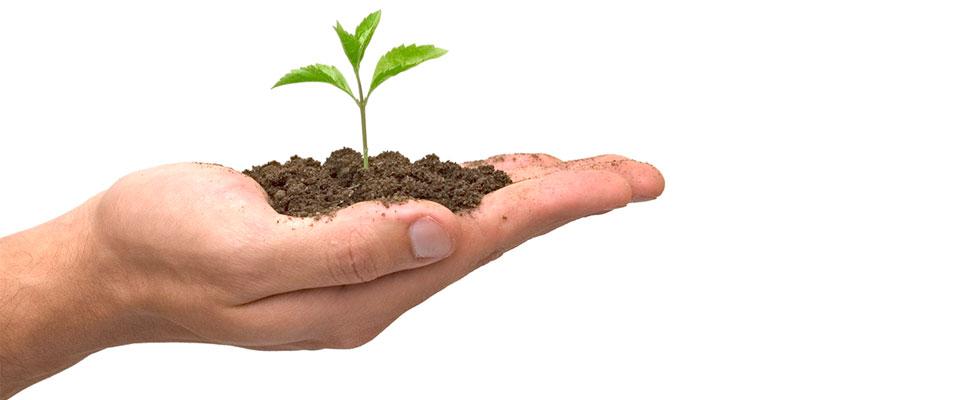 ElvanaAgoraCom_hand-planting-seed_exp